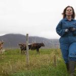 Milchkrieg in Dalsmynni